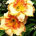 Flowers Of Summer by Elijah Gomez