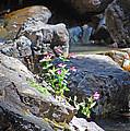 Flowers On The Rock by Christina Jo Horton