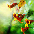 Flowers On The Vine by Michael Eingle