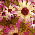 Flowers Pink And White by Ann Powell