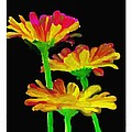 Flowers Quick Strokes by Ck Gandhi