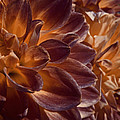Flowers Should Also Turn Brown In Autumn by Steve Taylor