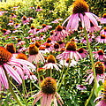 Flowers Standing Tall by Scott Hamilton
