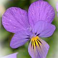 Flowers That Smile by Kerri Farley