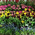 Flowers by Tom Brickhouse