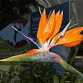 Flowers - Us Botanic Garden - 011311 by DC Photographer