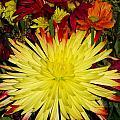 Flowers Yellow by Carol McKenzie