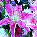 Flowerz2 by Riad Belhimer
