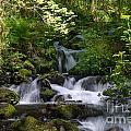 Flowing Creek In Spring  by Jackie Follett