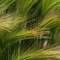 Flowing Grasses by Tam Ryan