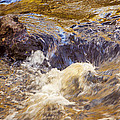 Flowing River Rapids by Carolyn Marshall