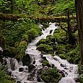 Flowing Stream In Spring by Jackie Follett