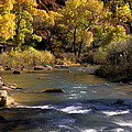 Flowing Through Zion National Park by Dave Mills