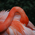 Fluffy Flamingo by Donna Proctor