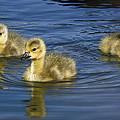 Fluffy Floaters  by Saija  Lehtonen