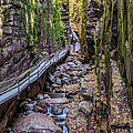 Flume Gorge In Franconia Notch Nh by Pierre Leclerc Photography