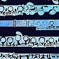 Flute Keys by Jenny Armitage