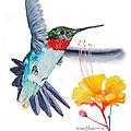 Da177 Flutter By Daniel Adams by Daniel Adams