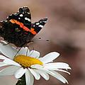 Flutter II by Sarah Boyd
