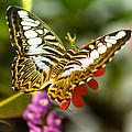 Fluttering by Jonah Anderson