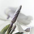 Fl.white4 by Theresa Heald
