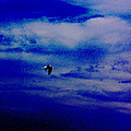 Fly By Night by David Schneider
