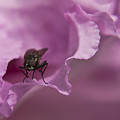 Fly On A Rhododendron by Terri Waters