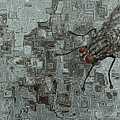 Fly On The Wall by Jack Zulli