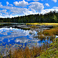 Fly Pond In The Adirondacks II by David Patterson