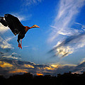 Flying Duck by Savannah Gibbs