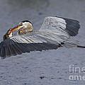 Flying Fish by Rick Mann
