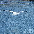 Flying Free by Felicia Tica