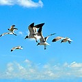 Flying Gulls by Kristina Deane