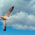 Flying High by Bianca Nadeau