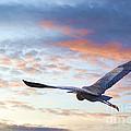 Flying High by John  Kolenberg