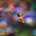 Flying Hummingbird And Bokeh by Peggy Collins