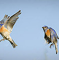 Flying by Jean Noren
