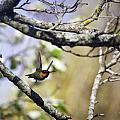 Flying Jewel by Michael Dougherty