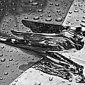 Flying Lady Hood Ornament In B And W by Crystal Nederman