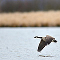 Flying Low by Randy Giesbrecht