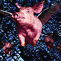 Flying Pigs Over San Francisco - Square by Wingsdomain Art and Photography