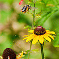 Flying Pollen by Cheryl McClure
