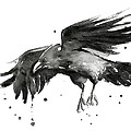 Flying Raven Watercolor by Olga Shvartsur