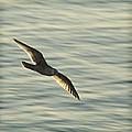 Flying Seagull by Yulia Kazansky