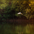 Flying Solo by Kim Henderson