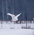 Flying Through by Cheryl Baxter