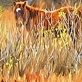 Foal In The Sticks by Alice Gipson