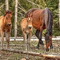 Foal Spot by James Anderson