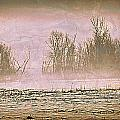 Fog Abstract 2 by Marty Koch