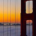 Fog City by Denise Cottin